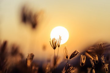 Flower and the sun