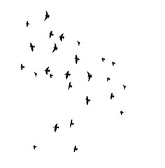 silhouette of flying birds, flight