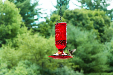 Hummingbird flying to a bird feeder