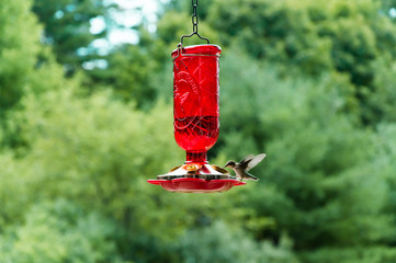 Hummingbird flying to a bird feeder