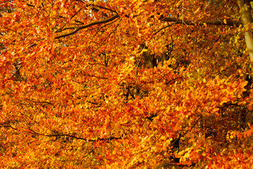 Autumn fall autumnal colored leafs yellow orange red