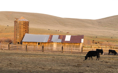 Sunset Rural Hills Cattle Ranch Farm Agriculture Barn Silo
