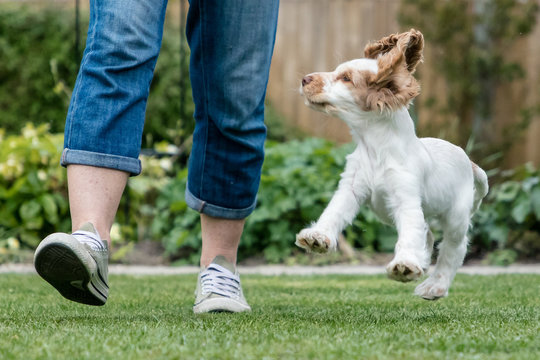 Happy puppy jumping in garden