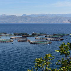 Fish farm in the calm blue waters of Ionian Sea near Corfu Island, Greece. Albanian coast seen on the horizon