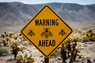 Bee warning sign in the cholla garden in Joshua Tree National Park.