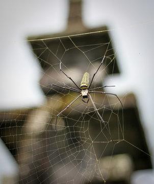 Besakih Temple Spider
