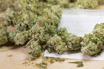 Harvested cannabis bud grown in California