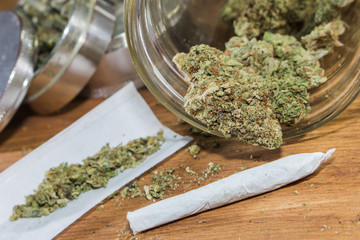 Rolling joints with trimmed cannabis grown in California.