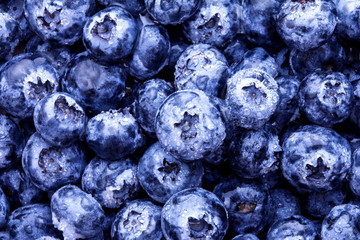 closeup the fresh picked blueberries