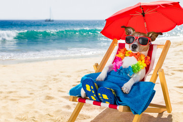 Poster Crazy dog dog siesta on beach chair