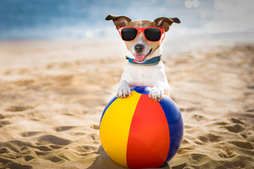 Stores photo Chien de Crazy dog at the beach and ocean with plastic ball