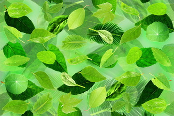 tree leaves texture background