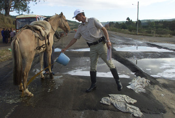 HORSE IS DISINFECTED AT A FOOT AND MOUTH CHECKPOINT IN BRAZIL.