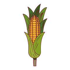 white background with corn cob with leaves with thick contour vector illustration