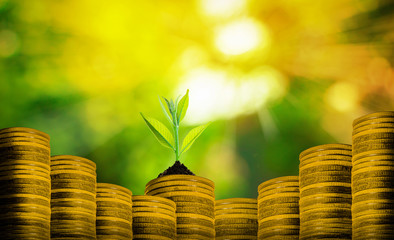 Group of small fresh plant over many coins with abstract blurred of nature and sunlight bokeh background, investment concepts. Fototapete