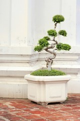 shaped decorative tree in temple