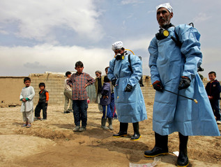 Afghan children watch veterinarians work in Dasht-i-Barchi west of Kabul