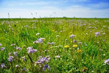Blumenwiese im Frühling - Natur Landschaft