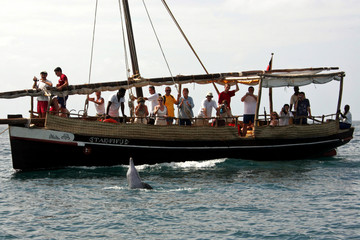 A dolphin plays in front of foreign tourists visiting on a dhow the Kenya's Kisite marine national park.