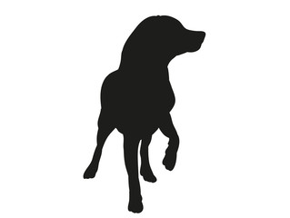Wall Murals Panther silhouette of a dog is black