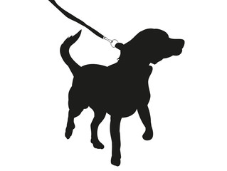 silhouette of a dog on a leash