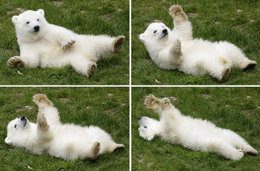 A combination of pictures shows polar bear cub Flocke (snowflake) in her enclosure at the zoo in Nuremberg
