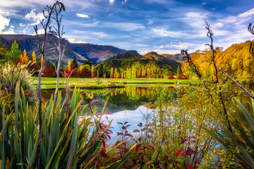 A Beautiful Pond in Rural New Zealand one Autumn