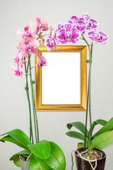 cadre doré panonceau fond vierge sous tiges d'orchidées
