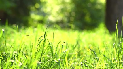 Fotoväggar - Spring grass meadow. Environment concept. Green nature background. 4K UHD video 3840X2160