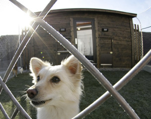 One-year-old dog Fine looks through the fence of her dog lodge garden in the worlds first dog luxury hotel in Freising