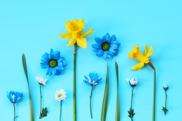 Yellow daffodils and colored daisies