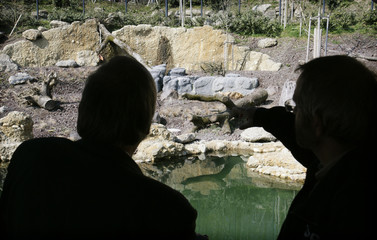 Visitors are silhouetted as they look at the the newly opened lion outside enclosure at Zurich zoo