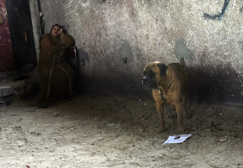A woman sleeps next to a dog for sale in a market in Cairo