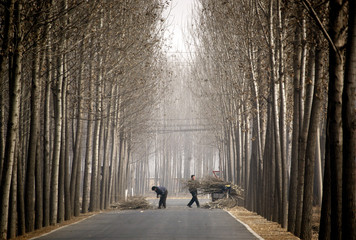 A farmer and his wife collect firewood along a road on the outskirts of Beijing