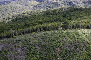 Felled trees are seen in this aerial picture taken near the border with Belize
