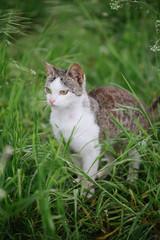 Cat in garden. Cute, young cat outdoor.