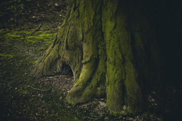 Close-up of mysterious looking hollow in the tree-trunk. Photo with shallow depth of field.