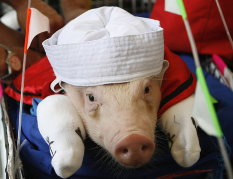 """A pig dressed as the cartoon character """"Popeye"""" takes part in a costumed parade of hogs at the Malolos town in Bulacan province"""