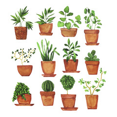 Set of doodle home plants painted by watercolor. Hand drawn illustration.