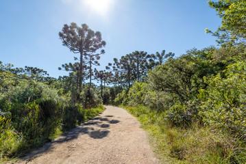 Hiking Trail of Itaimbezinho Canyon at Aparados da Serra National Park - Cambara do Sul, Rio Grande do Sul, Brazil