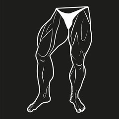 Vector image lower body man. The muscles of the legs. Black background