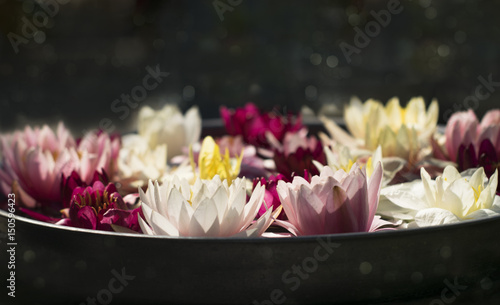 Beautiful multi colored lotus flowers in a round dish on a dark beautiful multi colored lotus flowers in a round dish on a dark background mightylinksfo