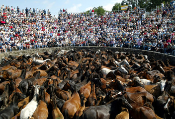 """People admire hundreds of wild horses which have been rounded up during the """"Rapa Das Bestas"""" event .."""