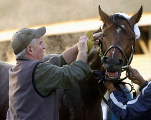 KENTUCKY DERBY HOPEFUL A P VALENTINE WASHED DOWN BY TRAINER NICK ZITO.