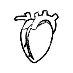 sketch heart human organ sport healthy vector illustration