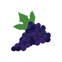 grape bunch fruit leaf food design vector illustration