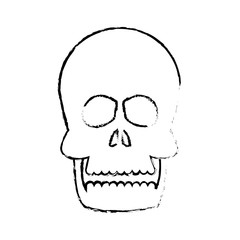 human skull anatomy health front sketch vector illustration