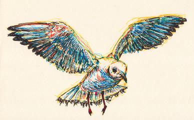 pigeon illustration hand drawn on paper