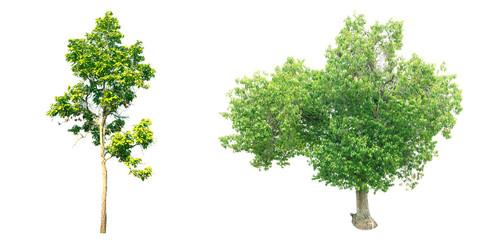 Collection of trees on white background. (for gardening)