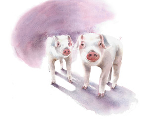 Piglets pigs farm animals cute pets watercolor painting illustration isolated on white background